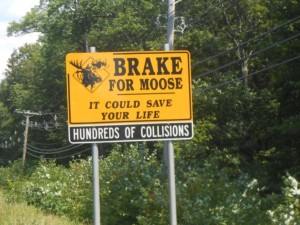 Brake for Moose sign